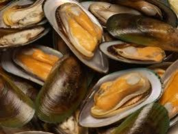 Green-Lipped Mussel for Pets