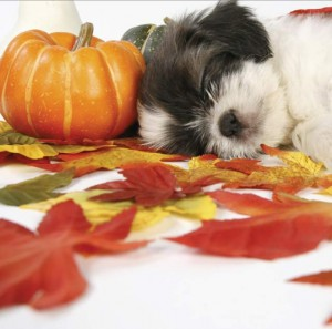 Autumn for Pets