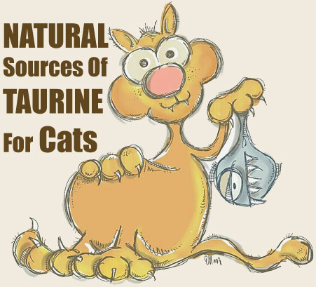Natural Sources of Taurine for Cats