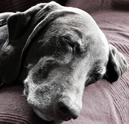 Natural cure for dog or cat diarrhea