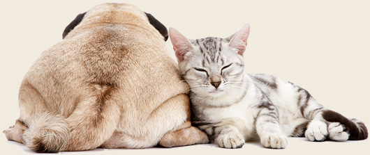 Natural Remedies For Diarrhea Enteritis In Dogs And Cats