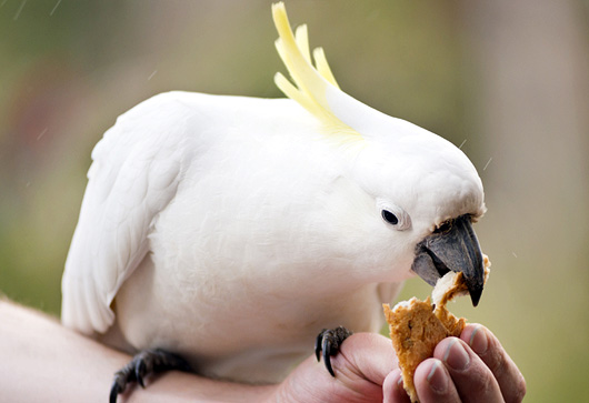 Bird Treat Recipe:  Corny Nut Squares