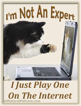 Cat Online Experts