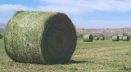 Alfalfa pet food supplements for dogs, cats, horses, fish
