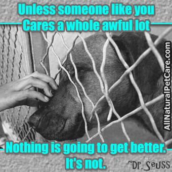 Help animal rescue charities on Pinterest