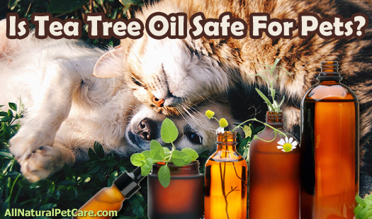 Is Tea Tree Oil Safe for Pets?