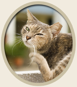 Natural Holistic Flea Treatment for Cats & Dogs