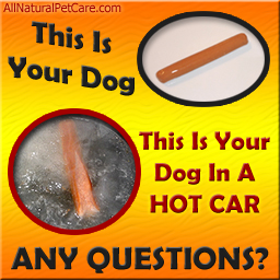 Free Dogs Die In Hot Cars Poster Graphic