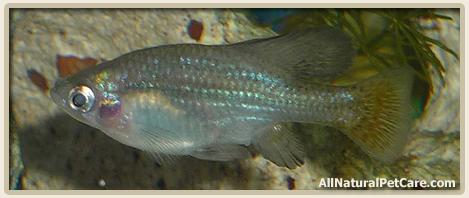 Increase Aquarium pH with Limestone
