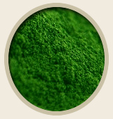 Chlorophyll Chlorella for Pets