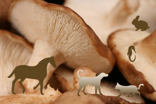 Are Medicinal Mushrooms Safe For Pets?