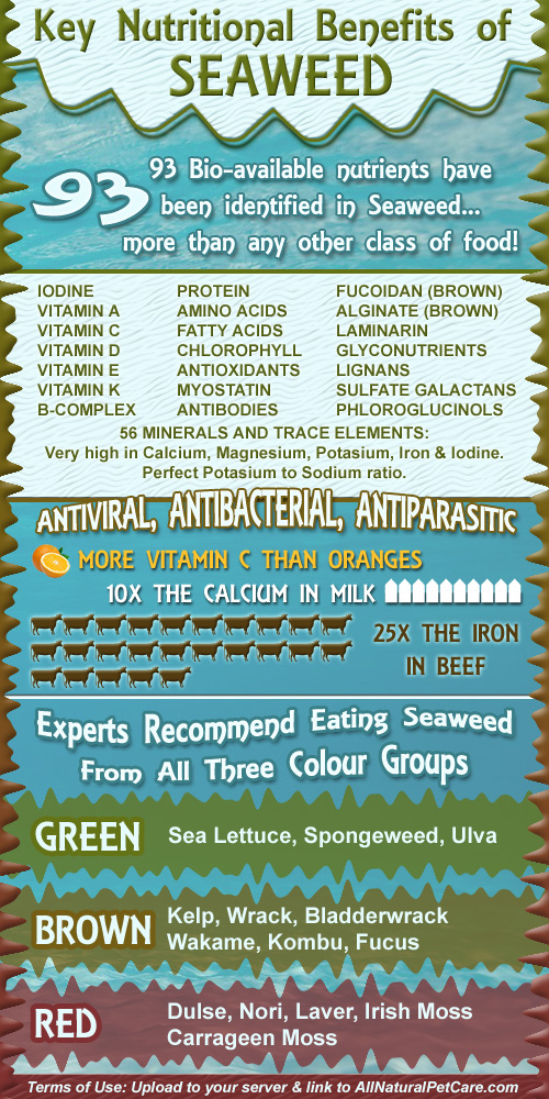 Nutritional Benefits of Seaweed Infographic