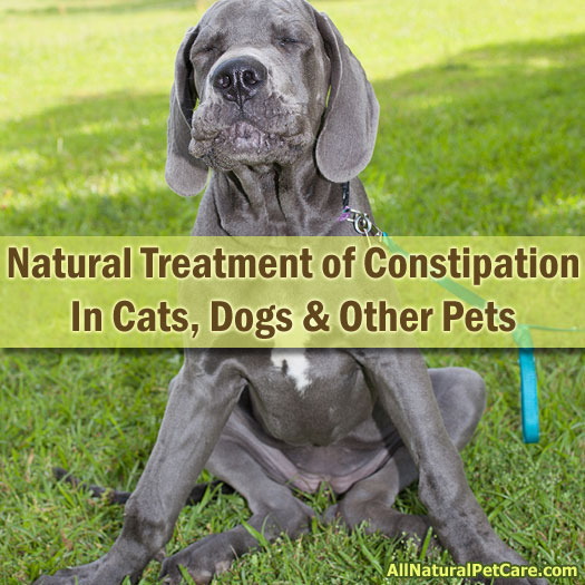 Natural Remedies for Constipation in Pets