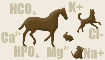 Natural Sources of Electrolytes for Pets & Treat Recipe