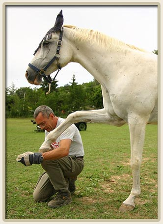 Natural Treatment of Hoof Ailments in Horses and Livestock