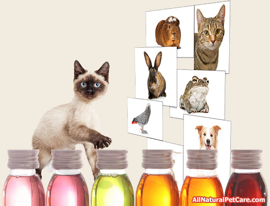 30 Essential Oils That May Not Be Safe For Pets