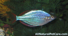 Naturally Enhance the Color of Aquarium Fish