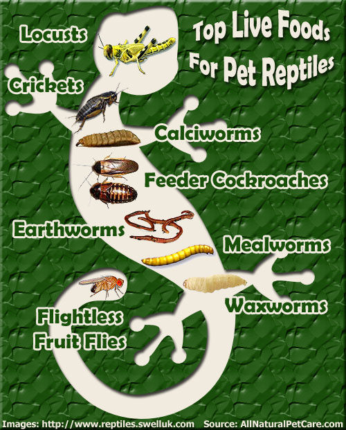 Top live food choices for pet reptiles all natural pet for All natural pet cuisine