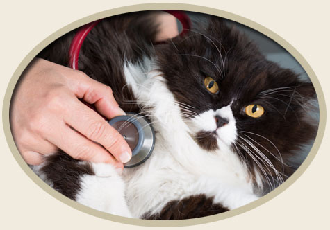 Natural Treatment for Feline Infectious Peritonitis FIP