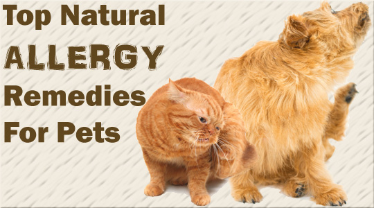 Top Natural Remedies for Dog and Cat Allergies