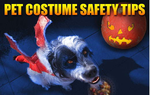 Pet Halloween Costume Safety