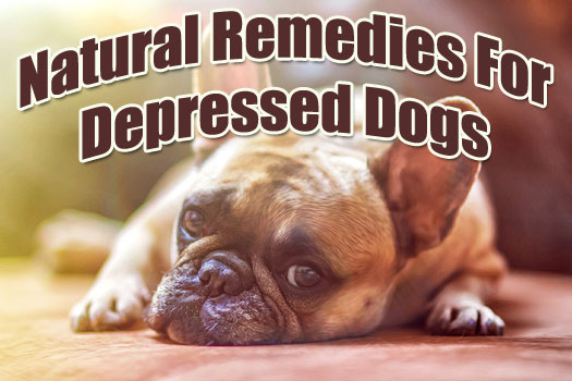 Natural Remedies for Depressed Dogs