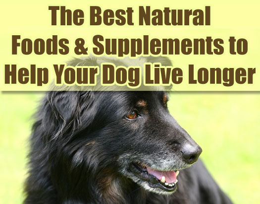 The Best Natural Foods and Supplements to Help Your Dog Live Longer