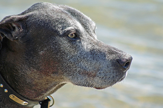 Caring for Senior Dogs: What Helps Them Live a Longer, Happier Life?