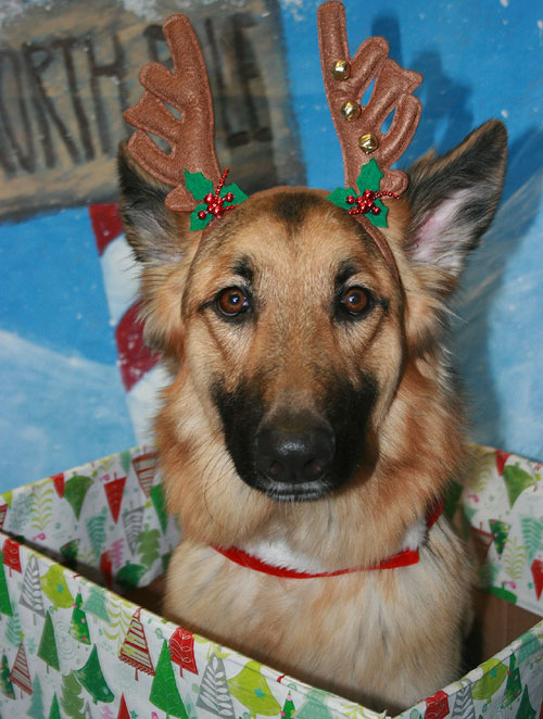 holiday shopping at online animal charities - Humane Society Christmas Cards
