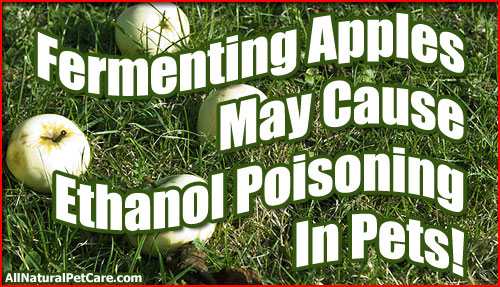 Fermenting Apples May Cause Ethanol Poisoning in Pets