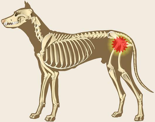 Pet Arthritis: Holistic Prevention and Natural Treatment