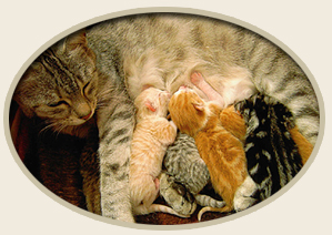 Natural remedies for Diarrhea in Cats and Dogs