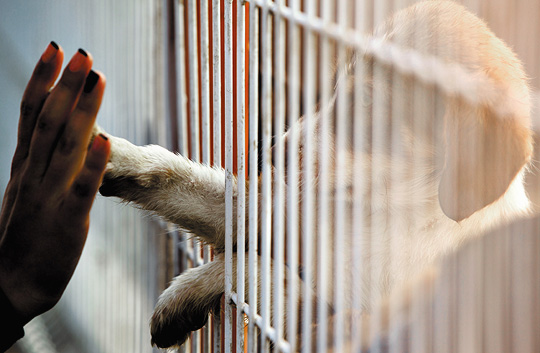 Holiday Help for Pet Shelters