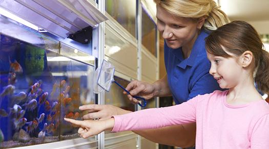 Natural Prevention and Treatment of Aquarium Fish Parasites