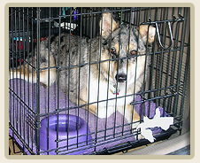 Car Motion Sickness in pets, dogs and cats