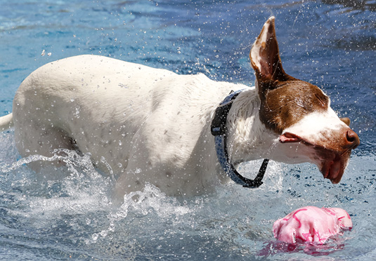 Natural Treatment and Prevention of 'Swimmer's Ear' (Otitis Externa) in Dogs