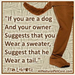 Dog Clothing & Costumes