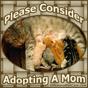 Adopt an adult cat from your local animal shelter