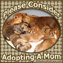 Adult dog adoption