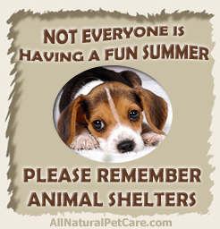 Help Animal Shelters This Summer