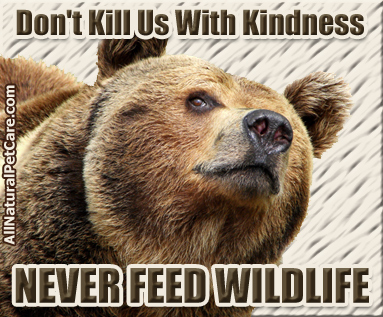 Never Feed Wildlife