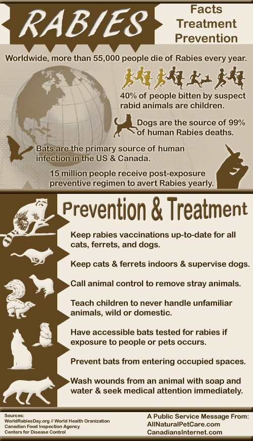 Rabies Statistics, Prevention and Treatment - Infographic - World Rabies Day
