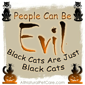 Black Cat Awareness Digi-Poster - October Animal Welfare Campaign