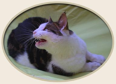 Natural Treatment of Feline Bronchial Disease