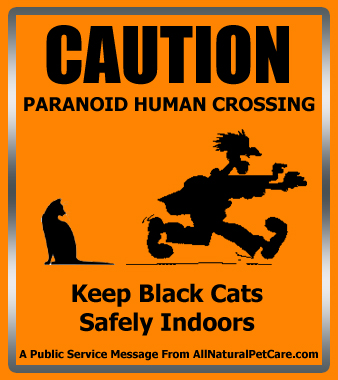 Black Cat Superstitions with Shareable Poster