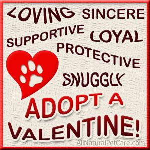 Adopt a Valentine
