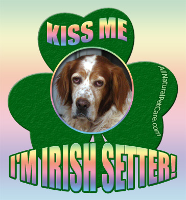 St. Patrick's Day Irish Setter Poster