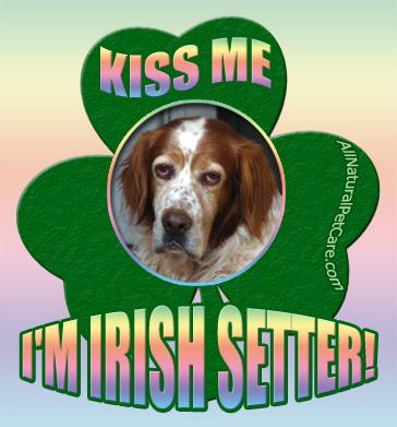 St. Patrick's Day Irish Setter Poster