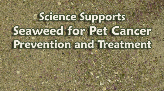 Seaweed for Pet Cancer Research