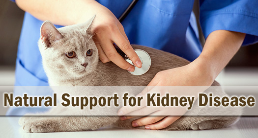 Natural Support for Feline Kidney Disease / Renal Failure